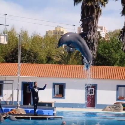 EGOR - Treinador de Golfinhos